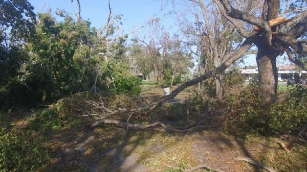 Naples Cambier Park after Irma 2