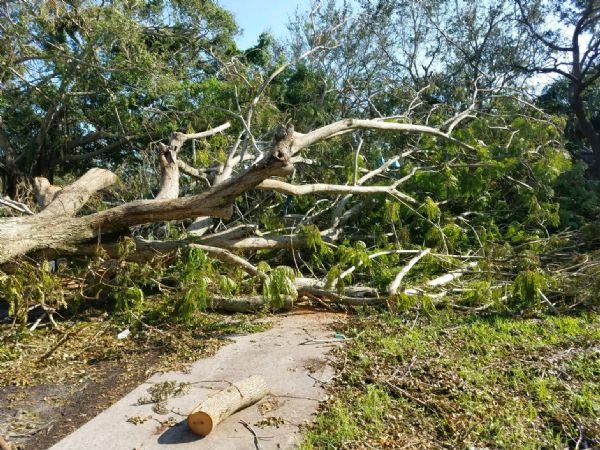 Naples Cambier Park after Irma 3
